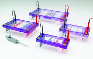 Cleaver Scientific Electrophoresis Equipment